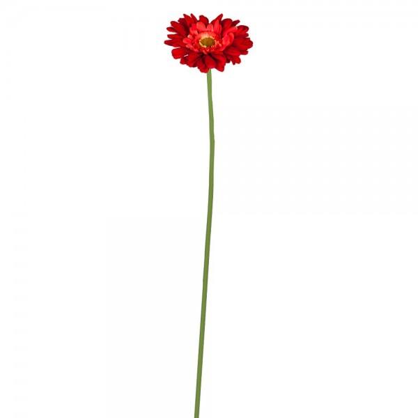 Gerbera blomma natural