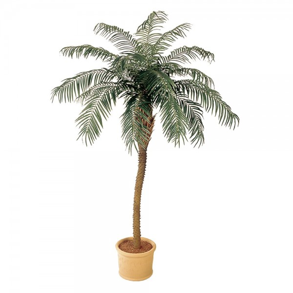 Palm Phoenix de Luxe