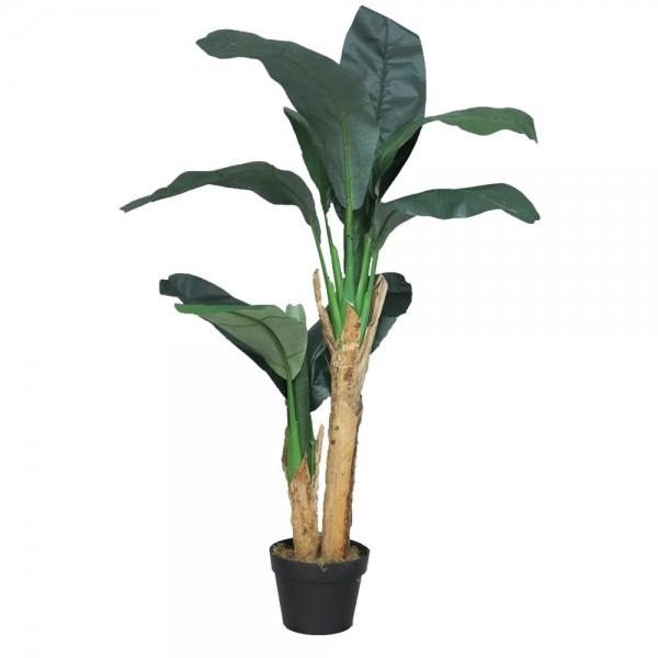 Bananträd i kruka