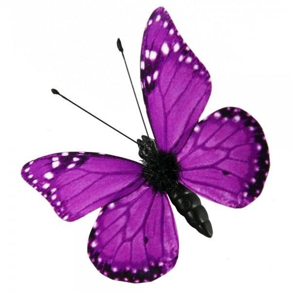 Fjärilar Magnet och clips