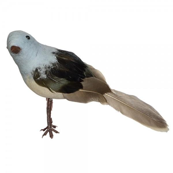 Fågel Robin stående